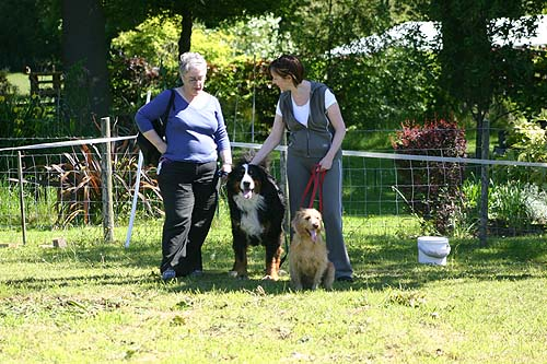 bruna bmd and leo basset fauve de bretagne with owners