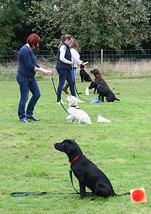 Basic Obedience class at DogBasics.co.uk in Norfolk