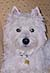West Highland Terrier boy Billy